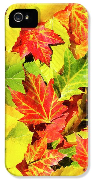 IPhone 5s Case featuring the photograph Autumn Leaves by Christina Rollo