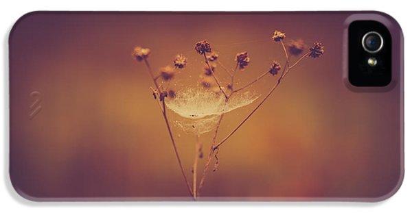 Autumn Web IPhone 5s Case by Shane Holsclaw