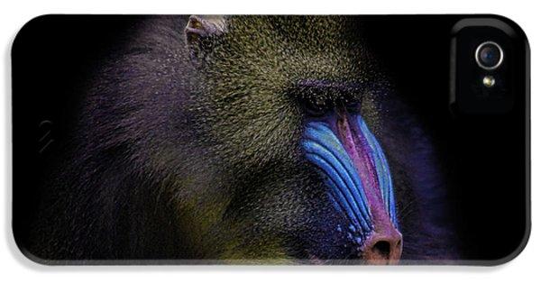 Gorilla iPhone 5s Case - Baboon Portrait by Martin Newman
