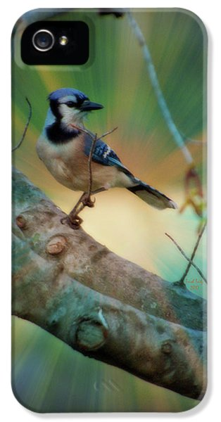 Baby Blue IPhone 5s Case by Trish Tritz