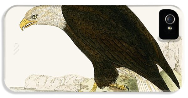 Bald Eagle IPhone 5s Case by English School