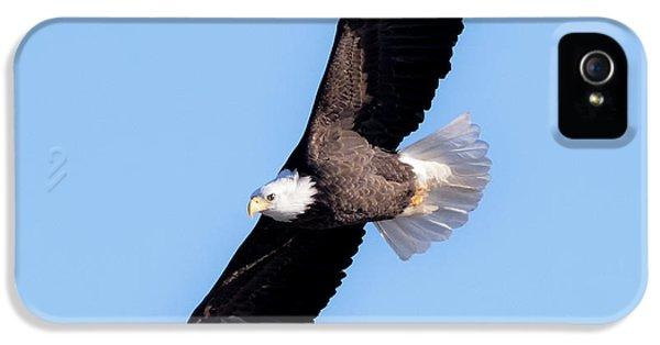 Bald Eagle Overhead  IPhone 5s Case