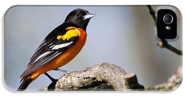 Baltimore Oriole IPhone 5s Case