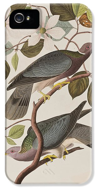 Pigeon iPhone 5s Case - Band-tailed Pigeon  by John James Audubon