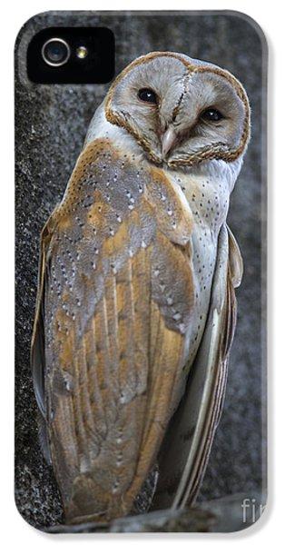 Barn Owl IPhone 5s Case