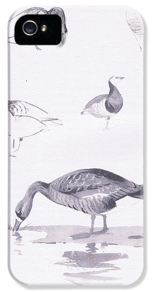 Barnacle And White Fronted Geese IPhone 5s Case by Archibald Thorburn