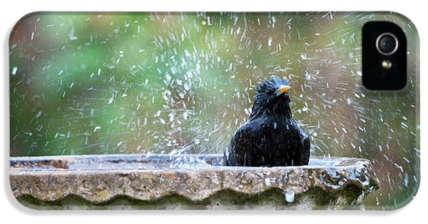 Starlings iPhone 5s Case - Bath Time by Tim Gainey