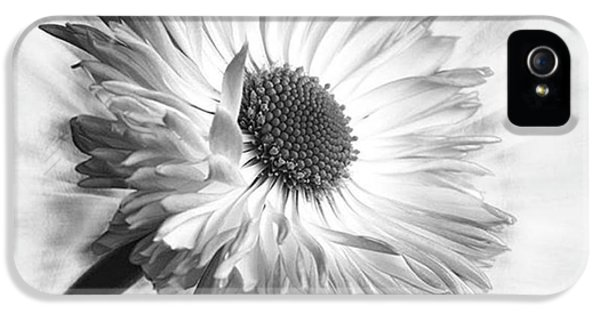 Beautiful iPhone 5s Case - Bellis In Mono  #flower #flowers by John Edwards