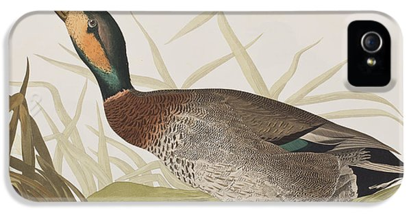 Bemaculated Duck IPhone 5s Case by John James Audubon