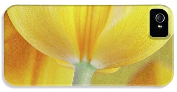 Beneath The Yellow Tulip IPhone 5s Case by Tom Mc Nemar