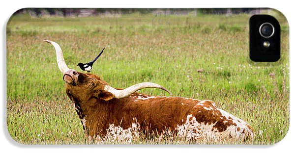 Best Friends - Texas Longhorn Magpie IPhone 5s Case by TL Mair