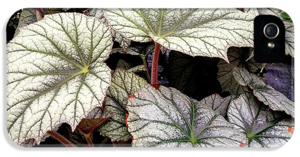 Big Begonia Leaves IPhone 5s Case by Nareeta Martin