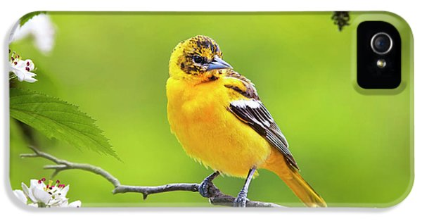 Bird And Blooms - Baltimore Oriole IPhone 5s Case