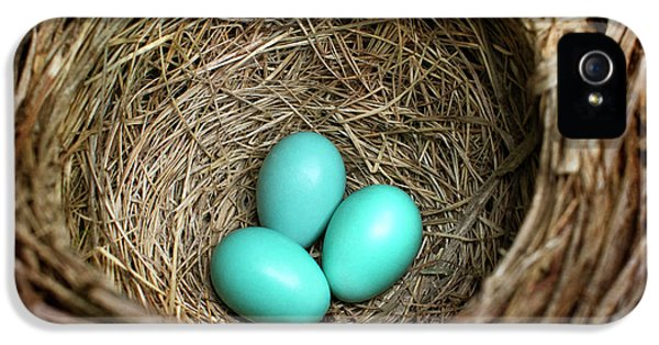 Birds Nest American Robin IPhone 5s Case by Christina Rollo