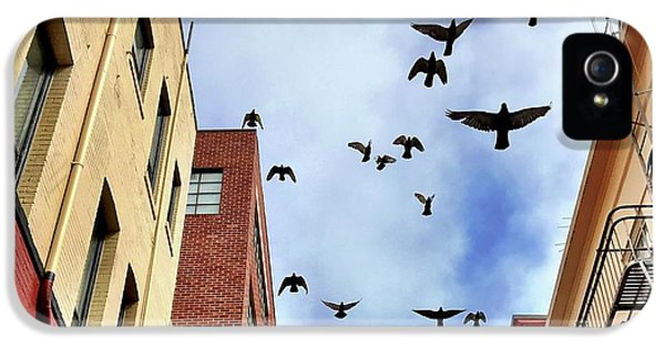 iPhone 5s Case - Birds Overhead by Julie Gebhardt
