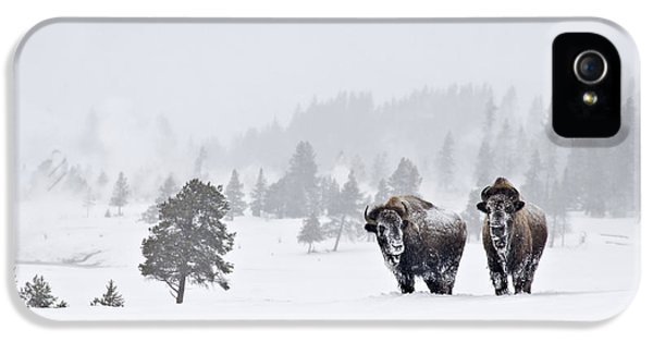 Bison In The Snow IPhone 5s Case by Gary Lengyel