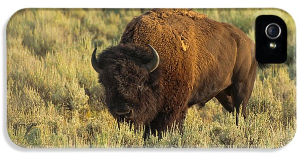 Bison IPhone 5s Case