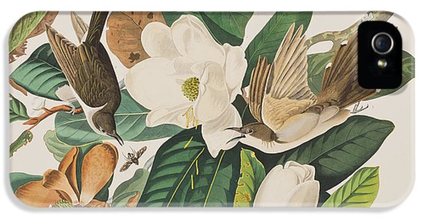 Black Billed Cuckoo IPhone 5s Case by John James Audubon