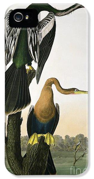 Anhinga iPhone 5s Case - Black Billed Darter by John James Audubon