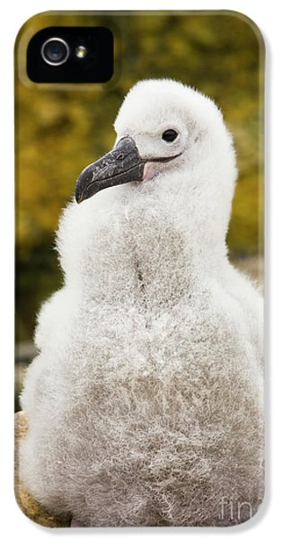 Albatross iPhone 5s Case - Black Browed Albatross Chic by Yva Momatiuk John Eastcott