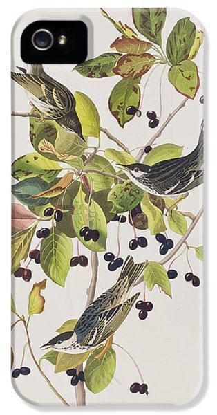 Black Poll Warbler IPhone 5s Case
