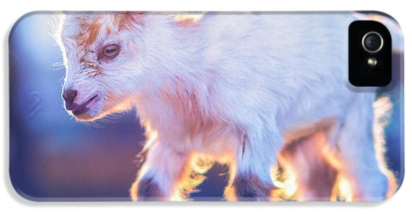 Little Baby Goat Sunset IPhone 5s Case by TC Morgan
