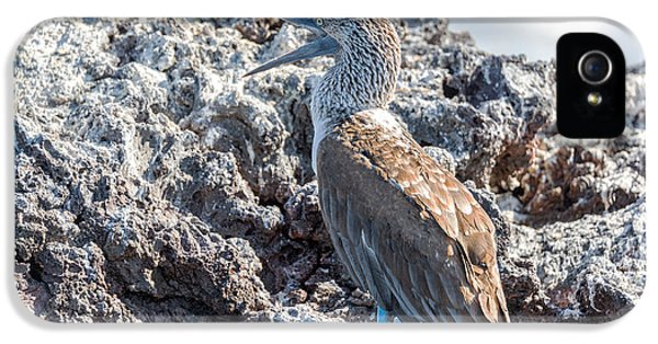 Blue Footed Booby IPhone 5s Case by Jess Kraft