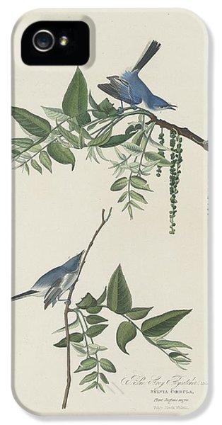 Flycatcher iPhone 5s Case - Blue-grey Flycatcher by Dreyer Wildlife Print Collections