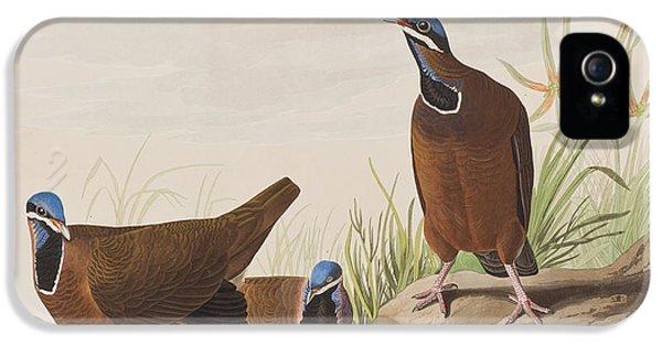 Blue Headed Pigeon IPhone 5s Case by John James Audubon