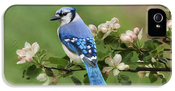 Bluejay iPhone 5s Case - Blue Jay And Blossoms by Lori Deiter