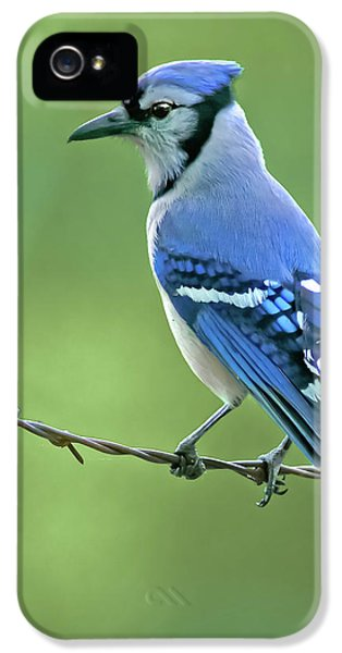 Bluejay iPhone 5s Case - Blue Jay On The Fence by Robert Frederick