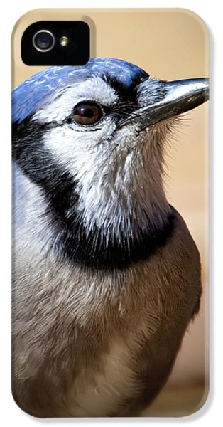 Blue Jay Portrait IPhone 5s Case by Al  Mueller
