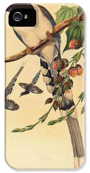 Magpies iPhone 5s Case - Blue Magpie, Urocissa Magnirostris by John Gould