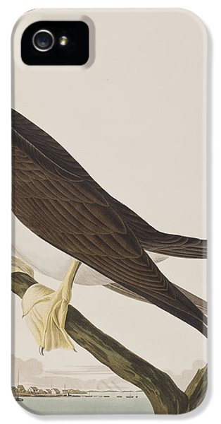 Booby Gannet   IPhone 5s Case by John James Audubon
