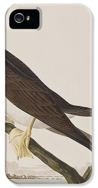 Booby Gannet   IPhone 5s Case by John James Audubon