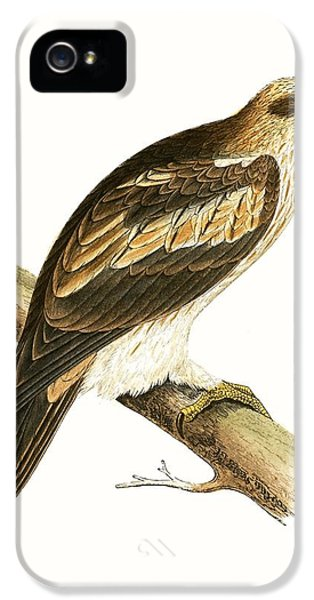 Booted Eagle IPhone 5s Case by English School