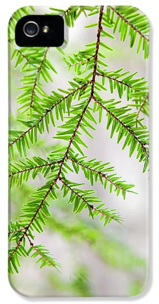 Botanical Abstract IPhone 5s Case by Christina Rollo