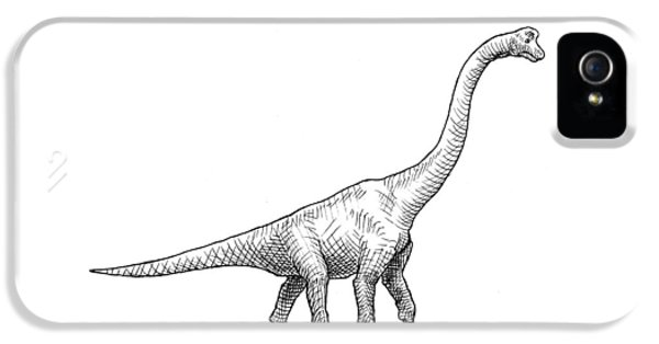 Brachiosaurus Black And White Dinosaur Drawing  IPhone 5s Case by Karen Whitworth