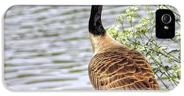 iPhone 5s Case - Branta Canadensis  #canadagoose by John Edwards