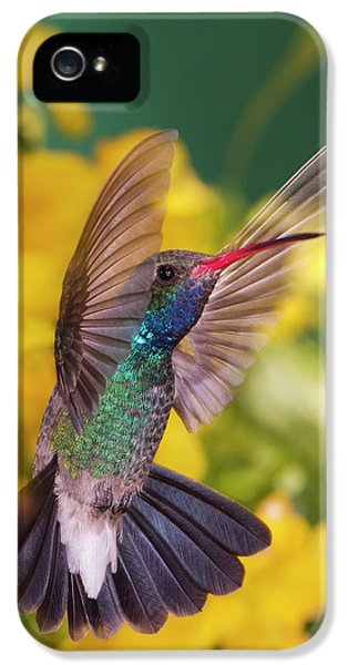 Humming Bird iPhone 5s Case - Broad-bill Pose by Janet Fikar