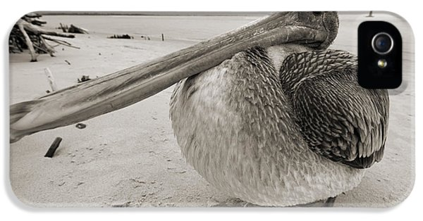 Pelican iPhone 5s Case - Brown Pelican Folly Beach Morris Island Lighthouse Close Up by Dustin K Ryan