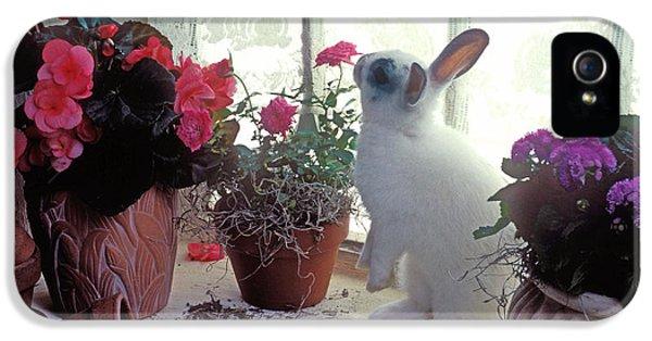 Bunny In Window IPhone 5s Case