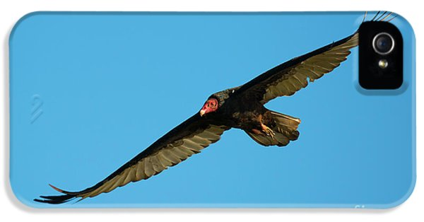 Buzzard Circling IPhone 5s Case by Mike Dawson