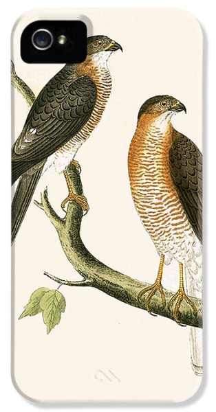 Calcutta Sparrow Hawk IPhone 5s Case by English School