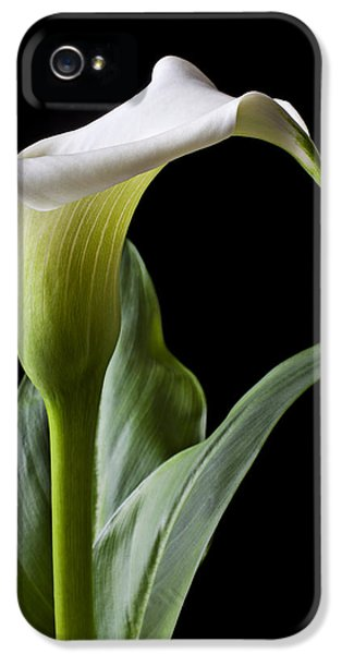 Calla Lily With Drip IPhone 5s Case