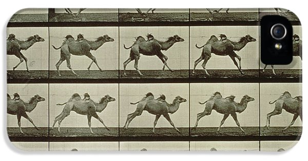 Camel IPhone 5s Case by Eadweard Muybridge