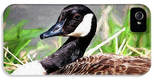 Goose iPhone 5s Case - Canadian Goose by Tom Mc Nemar