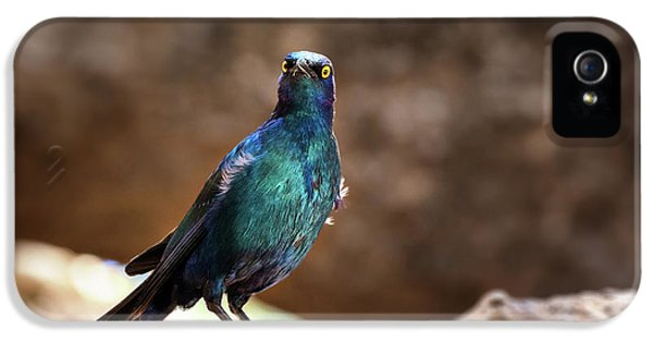 Cape Glossy Starling IPhone 5s Case