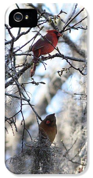 Lovebird iPhone 5s Case - Cardinals In Mossy Tree by Carol Groenen