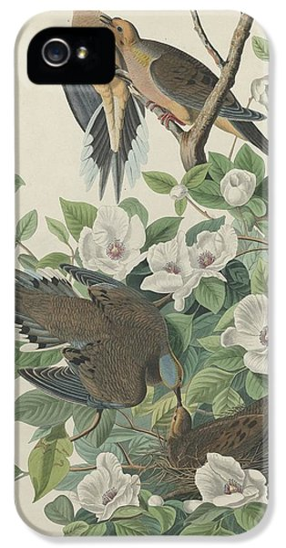 Carolina Pigeon Or Turtle Dove IPhone 5s Case by Rob Dreyer